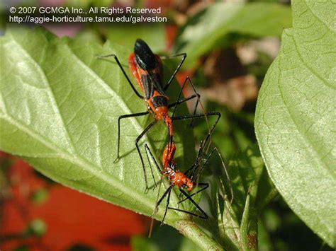 Beneficials In The Garden & Landscape Good Bug Vs Bad
