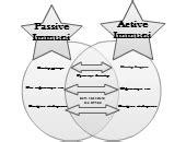 Active Passive Immunity Editable Venn Diagram