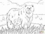 Coloring Ox Pages Malamute Alaskan Musk Printable Getcolorings Getdrawings Anarchy Ant sketch template