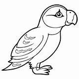 Coloring Puffin Bird Surfnetkids Animals sketch template