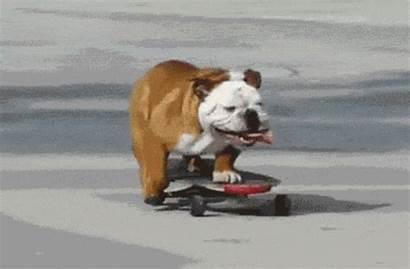 Tricks Dog Teach Down Stay Sit Lay