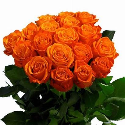 Orange Crush Roses Globalrose Stems