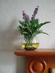 Lavender Flowers in a Vase