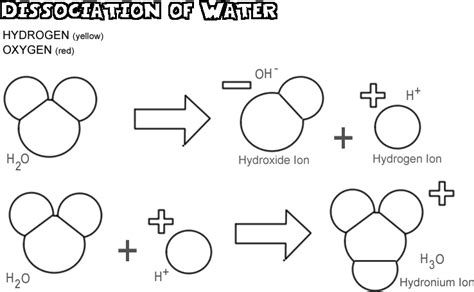 what ions form when water dissociates acids bases and the dissociation of water
