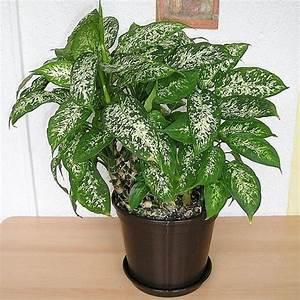 Plante Verte D39intrieur Liste Ooreka