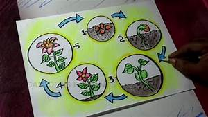 How To Draw Plant Life Cycle Poster Drawing