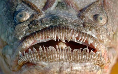 The Weirdest Looking Sea Creatures - Look4ward