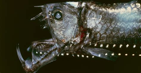 10 Creatures That Prove The Deep Sea Is An Extreme And Bizarre Place | HuffPost