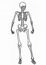 Skeleton Coloring Human Pages Posing Anatomy Skeletal System Printable Under Getcolorings Around Getcoloringpages Halloween sketch template