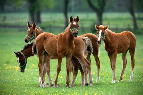 horse horsemanship