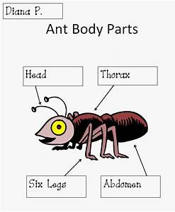 Ants  Body Parts And Lesson Plans On Pinterest