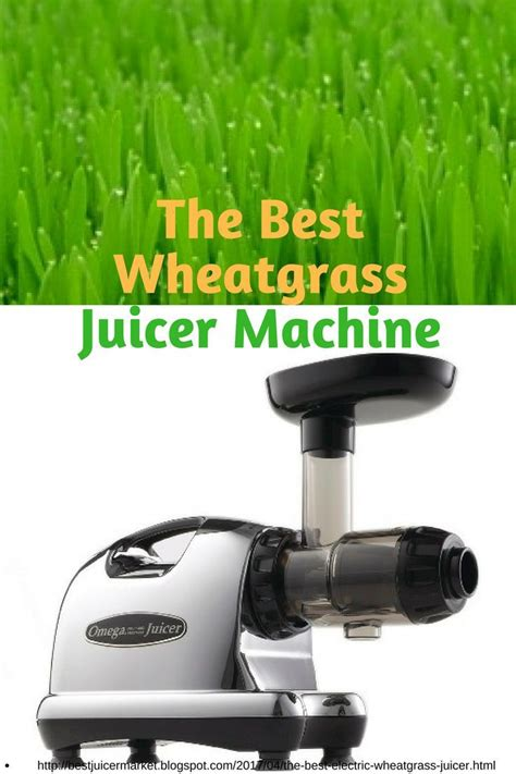 juicers market wheatgrass grass juicer
