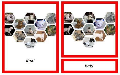 Kaķi - Mācību materiāli