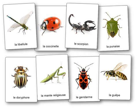 limagier des insectes  petites betes du jardin