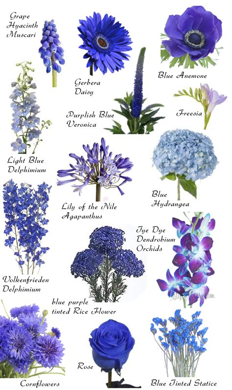 blue flower names color inspirations hayley s wedding tips 101