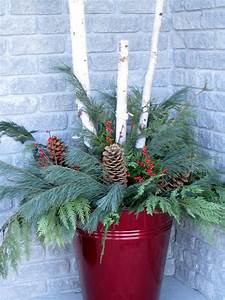 birch, poles, and, evergreens, in, red, container