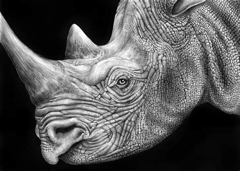 detailed animal drawings   ink twistedsifter