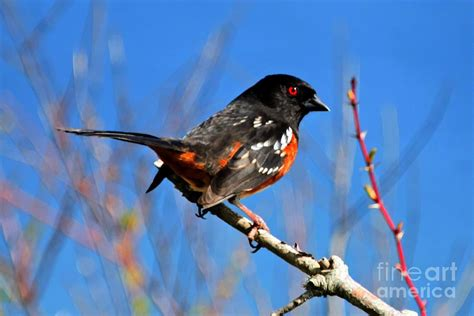 pacific nw birds