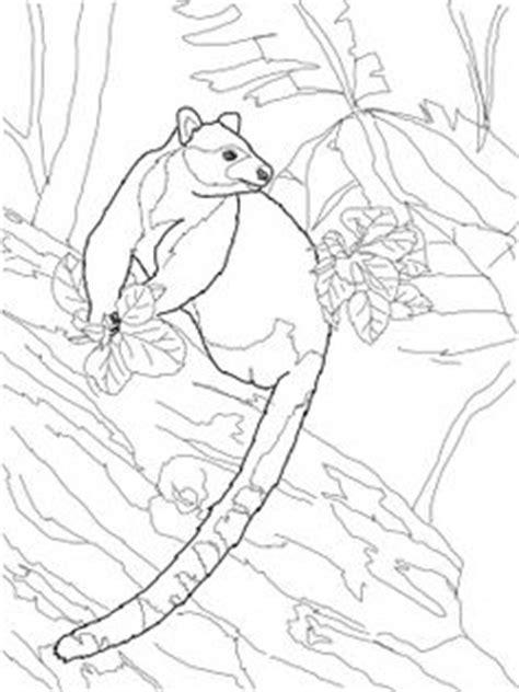 images  tree kangaroo  kids  pinterest