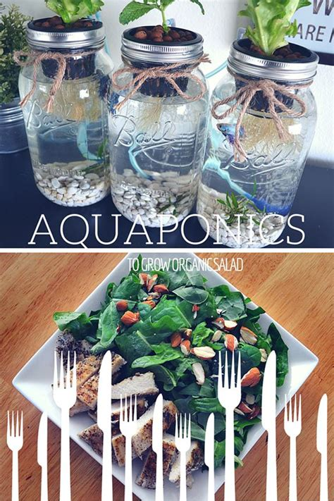 mason jar aquaponics kit build   hydroponics