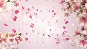 Animation Of Falling Petals Of Sakura With Flowers Sakura ...