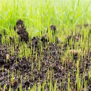 Semer Gazon Periode : quand semer de la pelouse les meilleures p riodes pour ~ Melissatoandfro.com Idées de Décoration