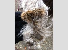 seeds dog DriverLayer Search Engine