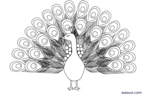 coloriage 224 dessiner de paon qui fait la roue