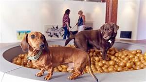 Gerüche Die Hunde Abschrecken : london bilder von der ersten kunstausstellung f r hunde musikexpress ~ Frokenaadalensverden.com Haus und Dekorationen