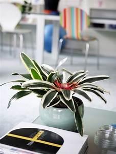 Zimmer Geruch Entfernen : 5 pflanzen die die luftqualit t in ihrem zuhause verbessern ~ Markanthonyermac.com Haus und Dekorationen
