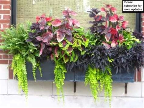 in door plants pot three four plants argements flower pot arrangement ideas pictures of car decor