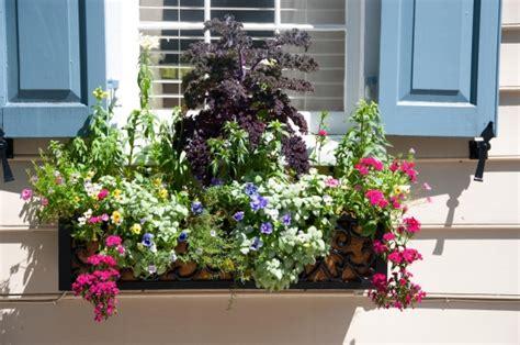 Gemüse Im Balkonkasten by G 228 Rtnern Im Eigenen Garten Anwendung Kr 228 Uter