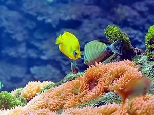 Bilder Mit Fischen : ergebnis f r ein farbenfrohes hintergrundbild mit fischen in einem aquarium die fische k nnen ~ Frokenaadalensverden.com Haus und Dekorationen