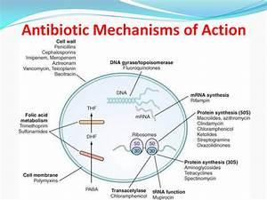 Antibiotics Mechanism Of Action Diagram