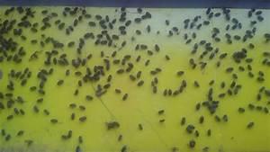 Mini Fliegen Am Fenster : habe kleinbe schwarze tierchen im vorbau fliegen ans fenster runter und sind tod tiere ~ Watch28wear.com Haus und Dekorationen