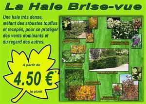 Haie Naturelle Brise Vue : haie brise vue naturelle simple bambou en pot u brisevue ~ Premium-room.com Idées de Décoration