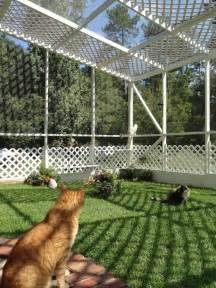cat outdoor enclosure 13 cool catios for your feline friend brit co