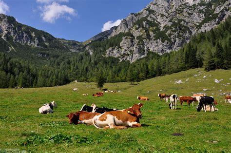 Pokljuka - Planina Konjščica | KRAJI - Slovenija