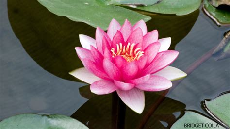 dwelling in the lotus heart a meditation practice yoga