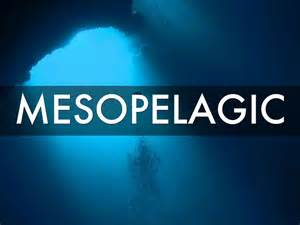 ocean mesopelagic biomes open