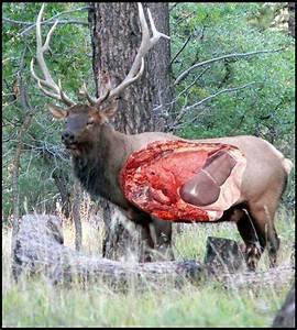 Elk Vitals Diagram