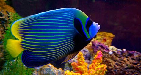 Reef Fish, Marine Fish, Coral, Aquarium Supplies & more