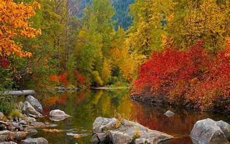 fall awesome forest river water widescreen  hd
