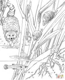 Racoon In The Forest coloring page | Free Printable ...