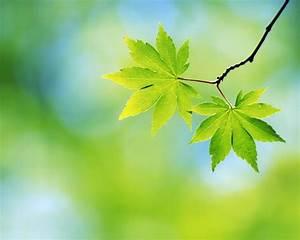 20, beautiful, leaves, photos