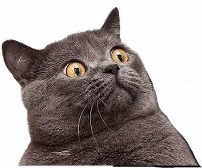 Cat Funny Transparent Cats Clipart Meme Face