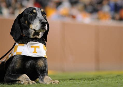 Best Mascot In The Sec, Hands Down. Smokey-university Of