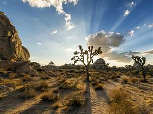 Insider U2019s Guide To Joshua Tree National Park