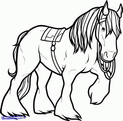 Horse Coloring Pages Clydesdale Shire Friesian Drawing