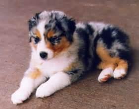 medium sized dog breeds animals photos directory